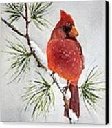 Mr Cardinal Canvas Print by Bobbi Price