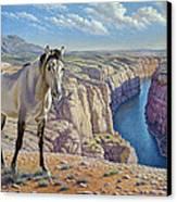 Mustang At Bighorn Canyon Canvas Print by Paul Krapf