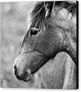 Mustang Close 1 Bw Canvas Print by Roger Snyder