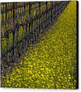 Mustrad Grass In The Vineyards Canvas Print by Garry Gay