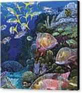 Mutton Reef Re002 Canvas Print by Carey Chen