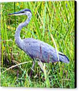 My Blue Heron Canvas Print by Greg Fortier