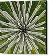 My Giant Sago Palm Canvas Print by Rebecca Cearley
