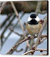 My Lil Chickadee Canvas Print by Rhonda Humphreys
