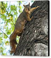 My Peanut Canvas Print by Robert Bales