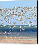 My Tern Canvas Print
