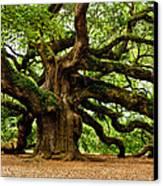 Mystical Angel Oak Tree Canvas Print by Louis Dallara