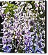 Nancys Wisteria Cropped Db Canvas Print by Rich Franco