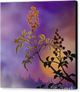 Nandina The Beautiful Canvas Print by Bedros Awak