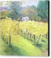 Napa Vineyard Canvas Print by Barbara Anna Knauf