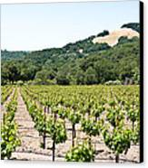 Napa Vineyard With Hills Canvas Print by Shane Kelly