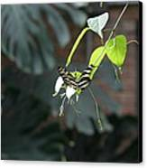 National Zoo - Butterfly - 12124 Canvas Print