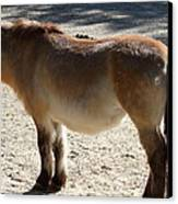 National Zoo - Donkey - 01134 Canvas Print by DC Photographer