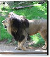 National Zoo - Lion - 01131 Canvas Print by DC Photographer