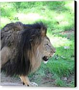 National Zoo - Lion - 01135 Canvas Print