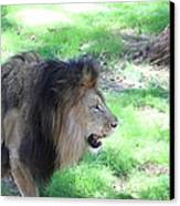 National Zoo - Lion - 01136 Canvas Print by DC Photographer