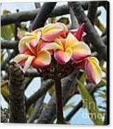 Natural Bouquet  Canvas Print