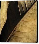 Natural Seduction Canvas Print by Dan Holm