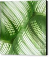 Nature Leaves Abstract In Green 2 Canvas Print