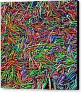 Needles Canvas Print