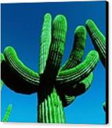 Neon Catus Canvas Print by Todd Sherlock