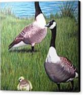 New Kid On The Block Canvas Print by Michelle Harrington