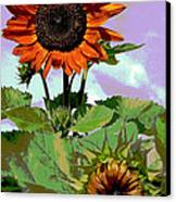 New Sunflowers Canvas Print by Annette Allman