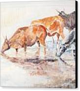 Nguni Cattle Canvas Print by David  Hawkins