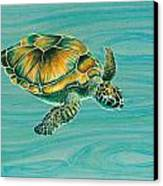 Nik's Turtle Canvas Print by Emily Brantley
