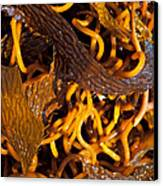 Noodles Of The Sea Canvas Print by Gwyn Newcombe