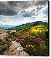 North Carolina Blue Ridge Mountains Roan Rhododendron Flowers Nc Canvas Print by Dave Allen