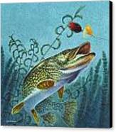 Northern Pike Spinner Bait Canvas Print by Jon Q Wright