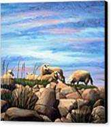 Norwegian Sheep Canvas Print