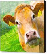 Nosey Cow Canvas Print by Jo Collins