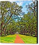 Oak Alley 3 Oil Canvas Print