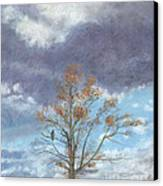 Oak And Clouds Canvas Print by Jymme Golden