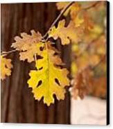 Oak Leaf Canvas Print by Denice Breaux