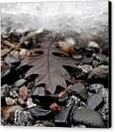 Oak Leaf On A Winter's Day Canvas Print by Steven Valkenberg