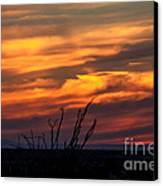 Ocotillo Sunset Canvas Print by Robert Bales