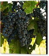 October Vintage Bonair Winery  Canvas Print