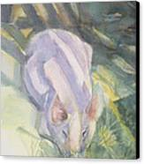 Ode To A Pig Canvas Print by Grace Keown
