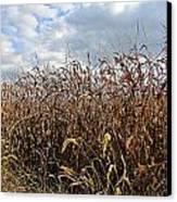 Ohio Corn Canvas Print by Andrea Dale