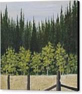 Old Fences Canvas Print