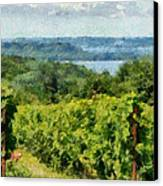 Old Mission Peninsula Vineyard Canvas Print