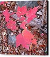 Old Rag Hiking Trail - 121259 Canvas Print