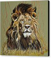 Old Warrior African Lion Canvas Print by Mary Dove