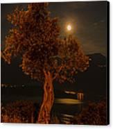 Olive Tree Under Moonlight Canvas Print by Jeffrey Teeselink