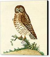 Ominous Owl Canvas Print