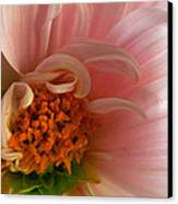 On Being A Dahlia Canvas Print by Kathy Yates