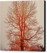 On Fire In The Fog Canvas Print by Lois Bryan